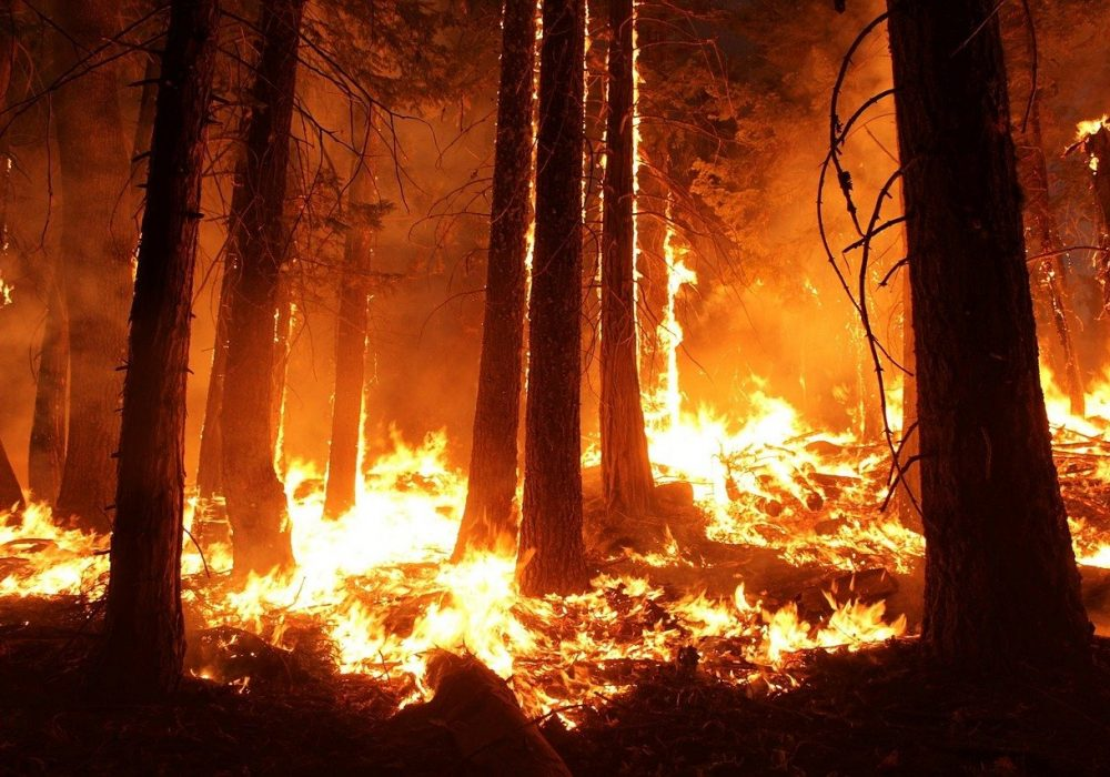 wildfire-1105209_1280 (1)